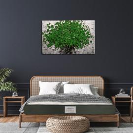 Dreamzee Tavasya - 7 Zone Ultra Luxury 100% Natural Latex Certified Organic Mattress